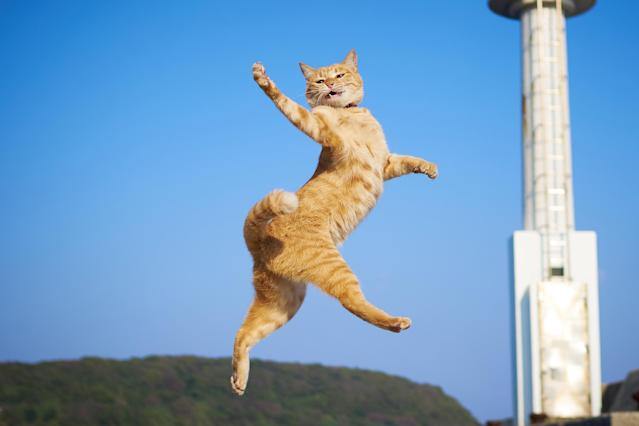 <p><span>Using his own rapid-fire reactions, Hisakata Hiroyuki photographs the lovable cats flying through the air, their legs and paws outstretched, like something out of an action movie. </span>(Photo: Hisakata Hiroyuki/Caters News) </p>