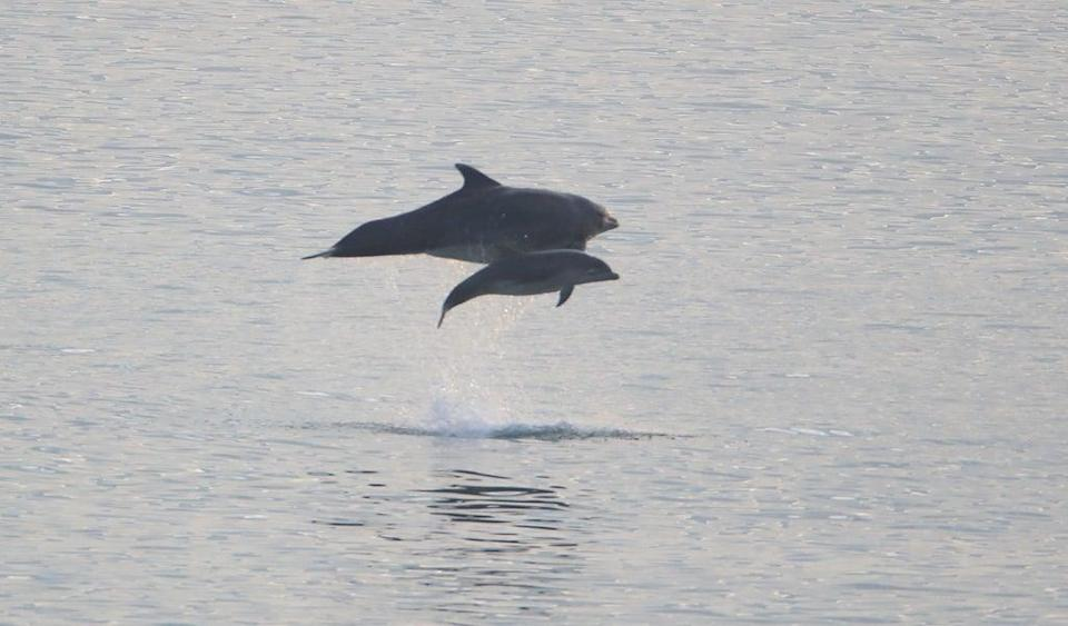 Scientists have found bottlenose dolphins in Wales communicate differently compared to other parts of the world  (PA)