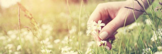 Woman picking flowers in a meadow, hand close-up.