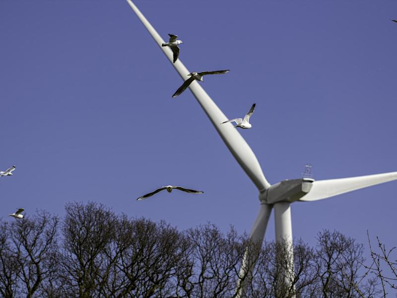 Wind farms kill birds
