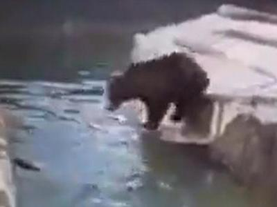Sabrina the bear followed the drunken intruder into the water inside her enclosure, causing a prolonged scuffle