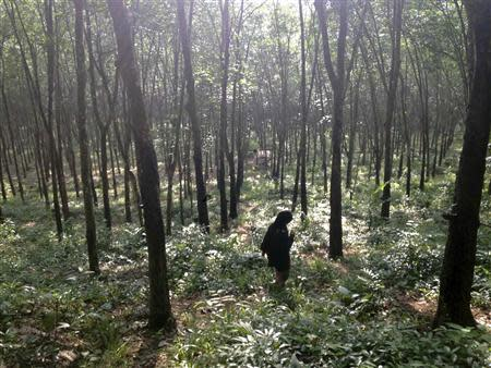 A guide walks through the woods outside a suspected human trafficking camp near Baan Klong Tor in southern Thailand October 30, 2013. REUTERS/Jason Szep