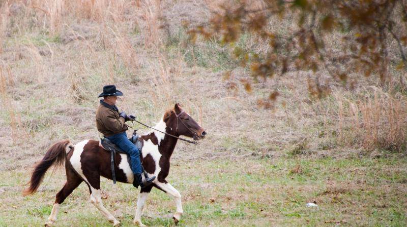 Roy Moore Rode In To Vote On A Horse Named 'Sassy'
