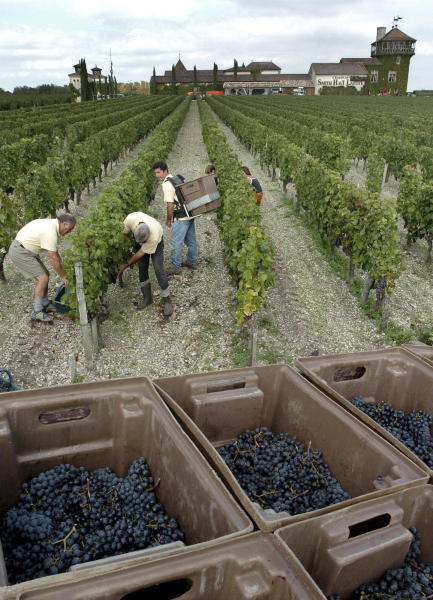 FILE - In this Sept.24, 2004 file photo, grape-pickers harvest grapes at the Chateau Smith Haut Lafitte, near Bordeaux, southwestern France, in the Grand Cru Classe de Graves. Amid a rising tide of concern and protest in France over the use of legal toxins by its massive and powerful farming industry, President Emmanuel Macron's government is planning the enforced creation of small buffer zones to separate sprayed crops from the people who live and work around them.(AP Photo/Christophe Ena, File)