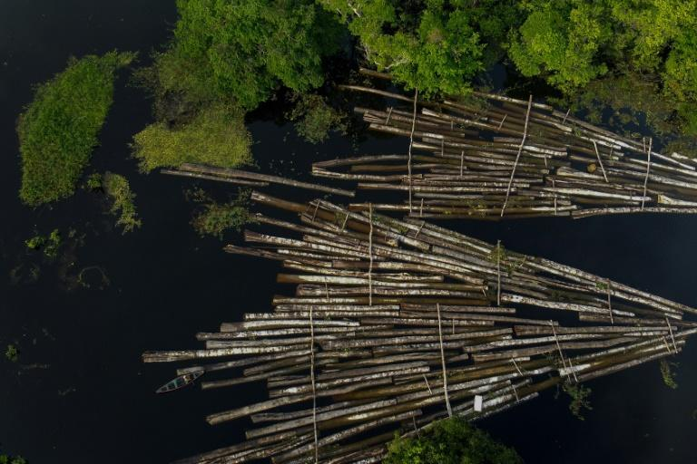 Aerial file photo taken on July 16, 2020 of logs of wood seized by the Amazon Military Police at the Manacapuru River in Manacupuru, Amazonas State, Brazil