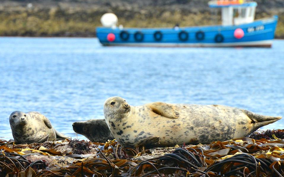 seals on farne islands - Getty