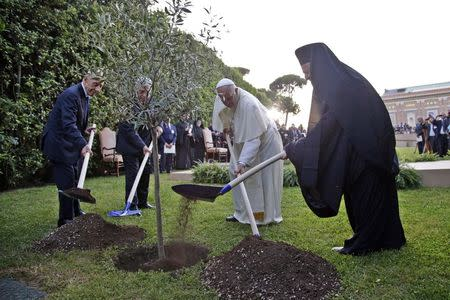(L-R) Israeli President Shimon Peres, Palestinian President Mahmoud Abbas, Pope Francis and Orthodox Patriarch Bartholomew I plant an olive tree saplings as a gesture of peace after a prayer meeting at the Vatican June 8, 2014. REUTERS/Max Rossi