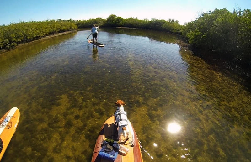 This Feb. 19, 2014 photo provided by Three Brothers Boards shows James Birney on a family outing using a durable wood paddle board during a paddling adventure in the Mobbly Bayou Preserve, Oldsmar, Fla. A sort of combination between surfing and kayaking, standup paddling has exploded in popularity the past few years. It's relatively easy and can be done just about anywhere there's water. (AP Photo/Three Brothers Boards, James Birney)