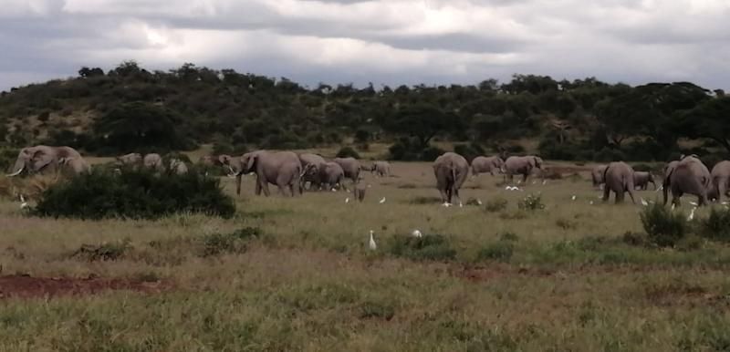 A herd of elephants and birds in the distance. The image is grainy and taken by a ranger.