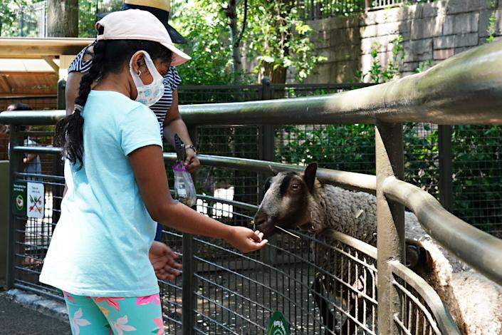 A child wears a protective mask while feeding a sheep at recently reopened Tisch Children's Zoo as the city continues Phase 4 of re-opening following restrictions imposed to slow the spread of coronavirus on July 27, 2020 in New York City.