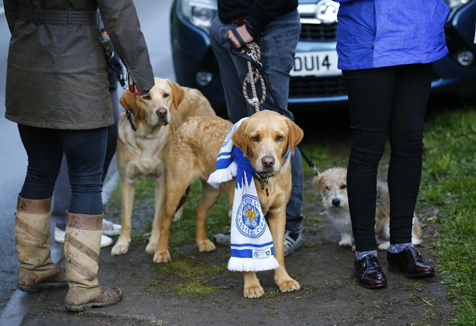 Britain Football Soccer - Leicester City players watch the Chelsea v Tottenham Hotspur game at Jamie Vardy's house in Melton Mowbray - Leicester - 2/5/16 Leicester City fans with their dogs outside Jamie Vardy's home Reuters / Darren Staples Livepic