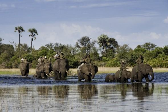 Amazing safaris in Africa and beyond