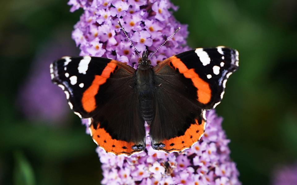 Butterflies are very sensitive to climate change - Owen Humpreys