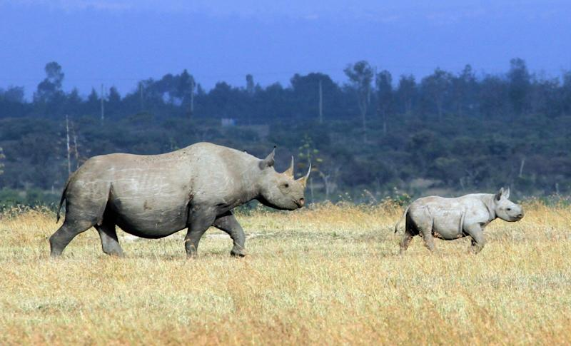 Rhino conservation has continued despite the coronavirus pandemic (Will Whitford)