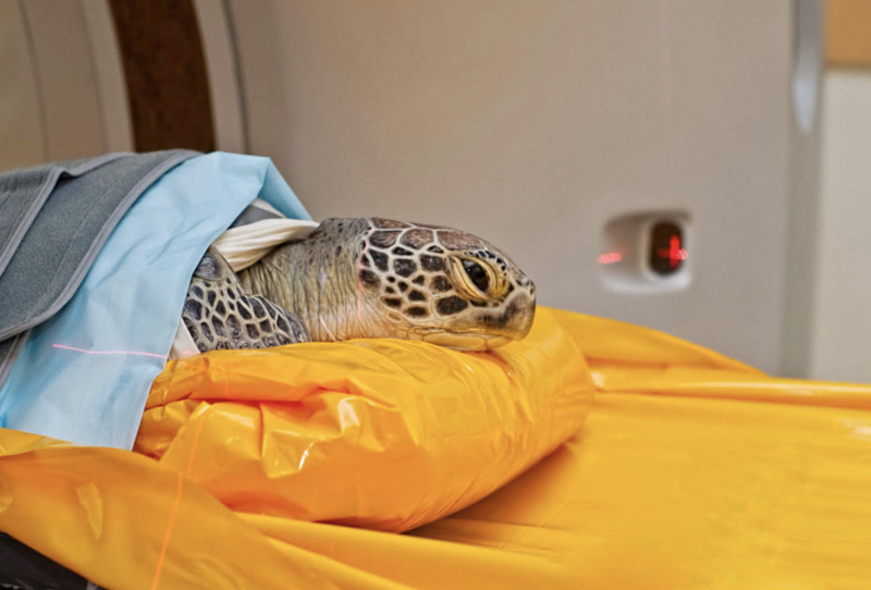 Jennie Gilbert founder of the Cairns Turtle Rehabilitation Centre says the lack of lids is concerning for all animals on the Great Barrier Reef. Source: Cairns Turtle Rehabilitation Centre