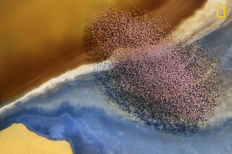 <p>In a picture taken from a helicopter flying over Lake Natron,a flock of flamingos clusters over the lake. (Phillip Chang/National Geographic Nature Photographer of the Year contest) </p>