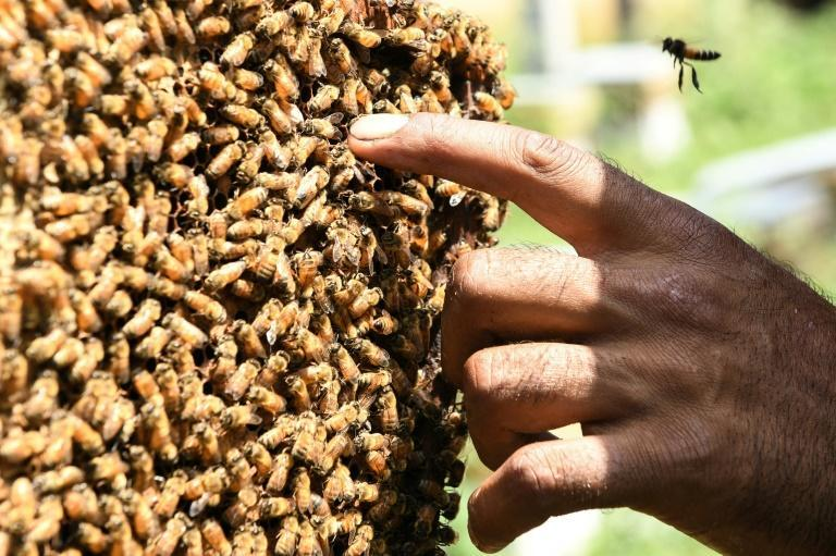 Dozens of Kashmiri beekeepers send their hives hundreds of kilometres away in the autumn to avoid the winter months (AFP/NARINDER NANU)