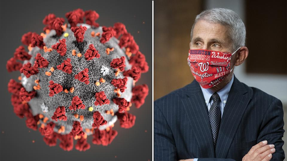 Dr. Anthony Fauci (Right) is pictured next to a microscopic view of the coronavirus virus.