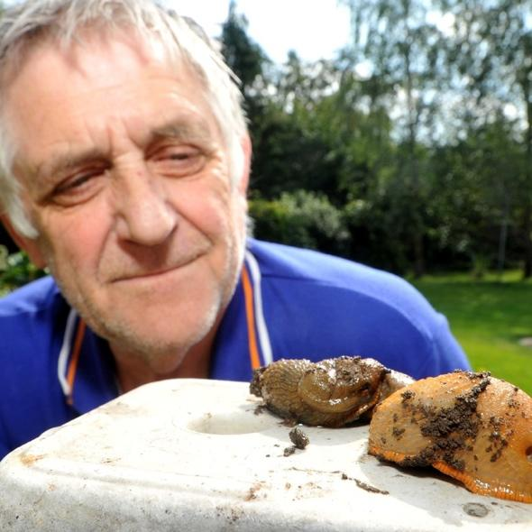 Giant slugs invading Britain