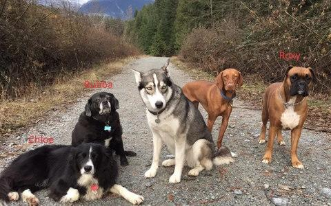 Annette Poitras, could not have survived over two days in the wilderness without the help of her dogs - Credit: Coquitlam Search and Rescue