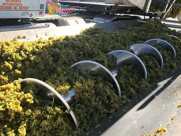 "Some of California's Santa Maria Valley's winemakers have just wrapped up the harvest season, also called the ""crush"" season. (Alex Stone/ABC)"