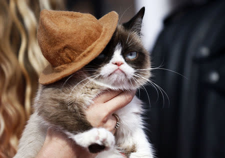Internet sensation Grumpy Cat passes away