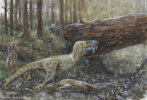 It's possible that a scavenging tyrannosaur fed on the specimen roughly 75 million years ago, the researchers said.