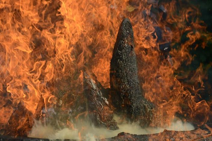 Flames engulf the rhino horns at a burning ceremony at Dvur Kralove zoo in the Czech Republic (AFP Photo/Michal Cizek)