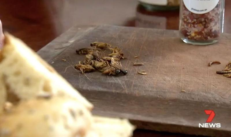 Bugs, rich in protein, are the new superfood. Source: 7 News