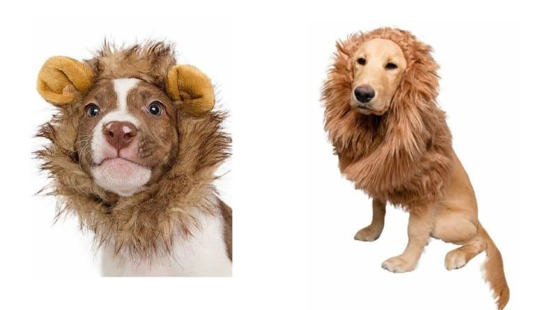 Turn your pet into king of the jungle, in sizes small or large.