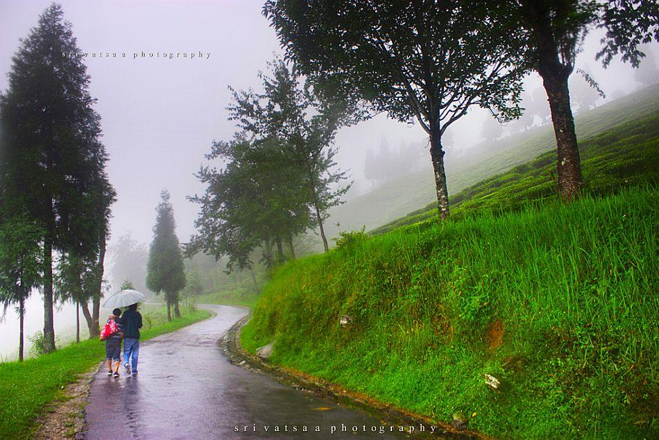 Sikkimese people love to walk, no matter what the weather. These two people, sharing an umbrella, were walking 6 km to Namchi to buy provisions.