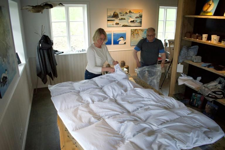 Erla Fridriksdottir (L), head of King Eider, one of the country's main exporters, says that when there are eggs still in the eider's nest they only take part of the down