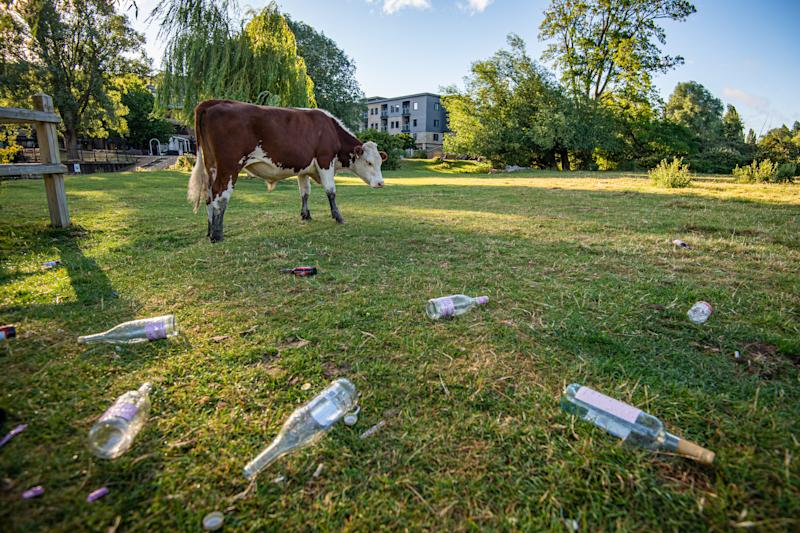 lITTER STREWN ACRS S MEADOWS AT THE RESRCVE
