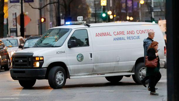 An animal control van turns from East Huron Street in the Gold Coast area of Chicago, where police and animal control were searching for a coyote who may have bitten a child in the the Lincoln Park area and a man outside Northwestern Memorial Hospital. (Chicago Tribune/TNS via Getty Images)