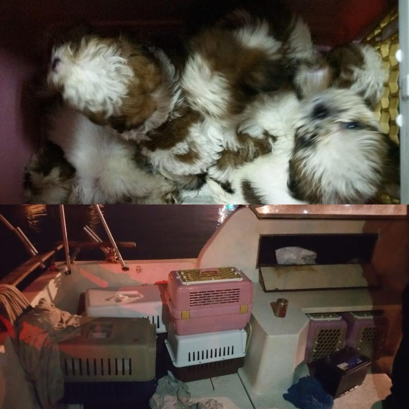 23 Puppies were smuggled in six carriers. (Photo: Singapore Food Agency Facebook page)