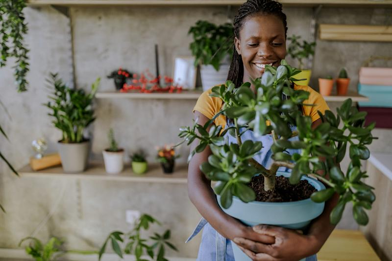 Brighten up your stuffy space with these air-cleaning houseplants. (Credit: Getty)