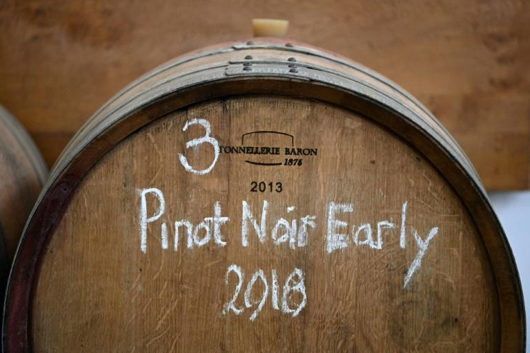 Instead of the traditional variety of Gamay grape used in Beaujolais, the English winemaker uses Pinot Noir