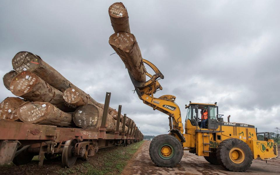 Gabon Special Economic Zone is a controlled hub for the extraction of timber on a sustainable basis - David Rose/