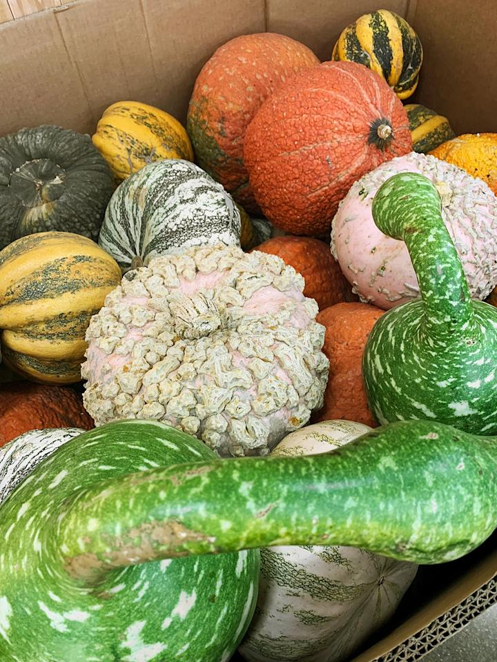 """<p>Though we're not exactly sure if the flesh of the TJ's assorted pumpkin collection, from mini gourds to gnotty varietals, is edible, we do know they provide a festive centerpiece for your table. We recommend carving the Orange Pumpkins ($3) and <a href=""""https://www.popsugar.com/food/How-Oven-Roast-Pumpkin-Seeds-20064084"""" class=""""ga-track"""" data-ga-category=""""Related"""" data-ga-label=""""https://www.popsugar.com/food/How-Oven-Roast-Pumpkin-Seeds-20064084"""" data-ga-action=""""In-Line Links"""">roasting the seeds</a>.</p>"""