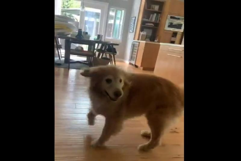 Twitter is Mighty Impressed With This Dog Who Breaks Into a Dance Whenever Presented With Food