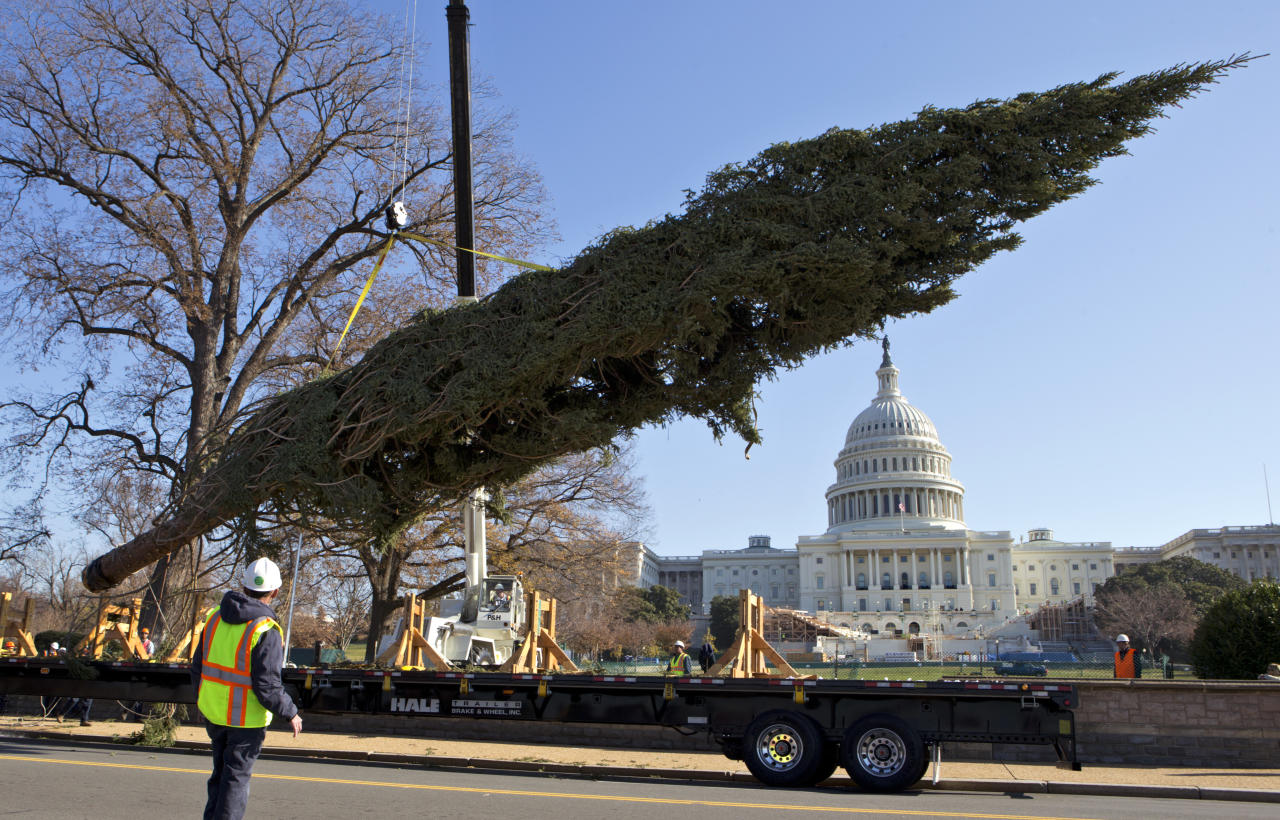 With the Capitol in the background, workers deliver the 2012 Capitol Christmas Tree, a 73 foot Engelmann Spruce from the White River National Forest, near Meeker, Colo., Monday, Nov. 26, 2012, on Capitol Hill in Washington. (AP Photo/J. Scott Applewhite)