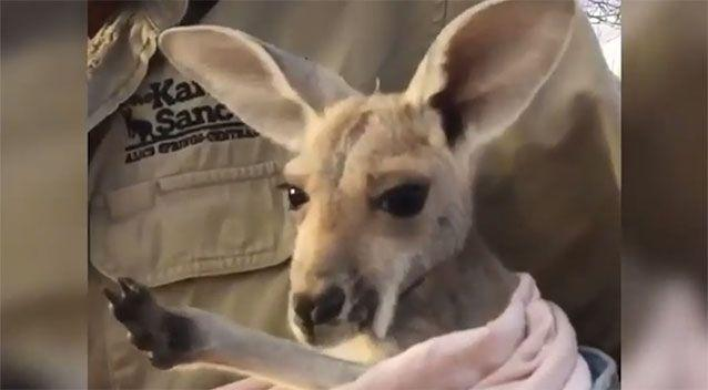 Thousands of people have watched Terri's attempt to get a cuddle. Source: The Kangaroo Sanctuary Alice Springs/ Facebook