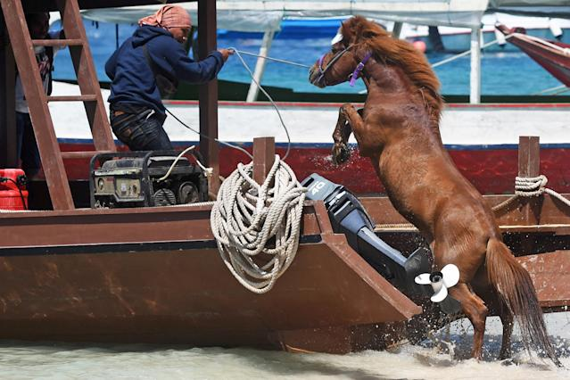<p>A man guides a horse onto a boat to transport it to the mainland following Sunday's earthquake on Gili Trawangan, Lombok, Indonesia, Aug. 9, 2018. (Photo: Antara Foto/Zabur Karuru via Reuters) </p>