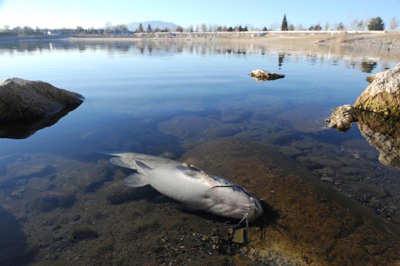 Thousands of fish dead in Nevada marina mystery
