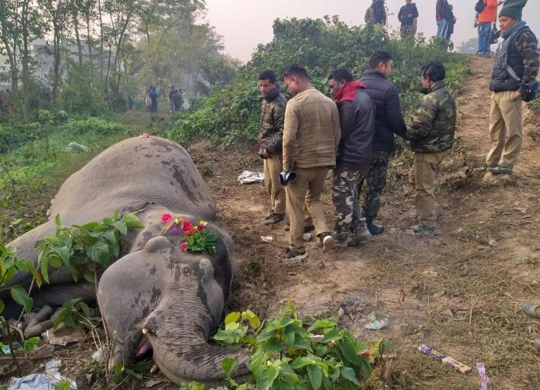 Two elephants were killed by an early morning train in eastern India on Wednesday