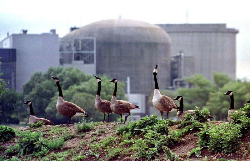 Canada geese stand near the troubled Ontario Hydro Pickering nuclear power station August 13. The pr..
