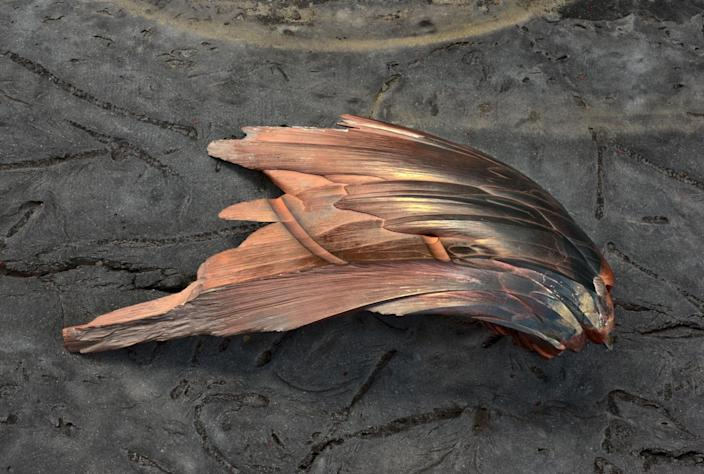 """<p>Hematite """"wing,"""" Academy of Natural Sciences, Drexel University, Philadelpia. (Photograph by Rosamond Purcell/Courtesy of BOND/360) </p>"""