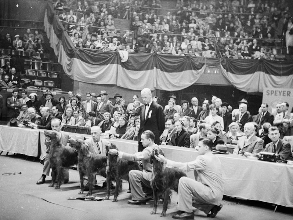 Spaniel finalists at Westminster Dog Show in Madison Square Garden, New York, in 1952.