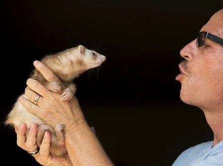 Pat Wright holds Bailey, one of his three pet ferrets, at his home, in La Mesa, California August 17, 2015. REUTERS/Mike Blake