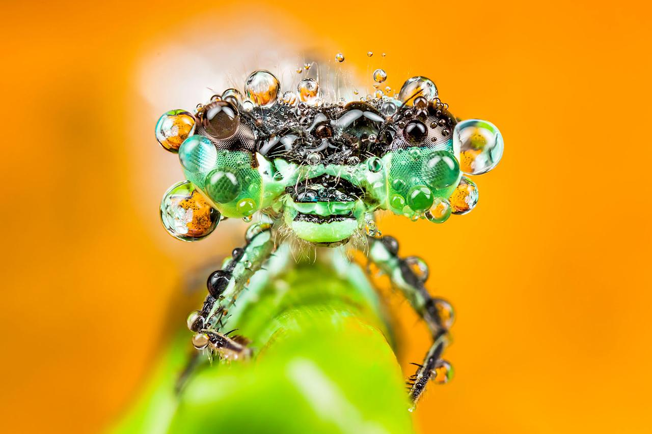 <p>Amateur macro-photographer František Dulík, 35, from Slovakia works as a technical engineer for medical devices when he is not capturing insects. (Photo: František Dulík/Caters News) </p>
